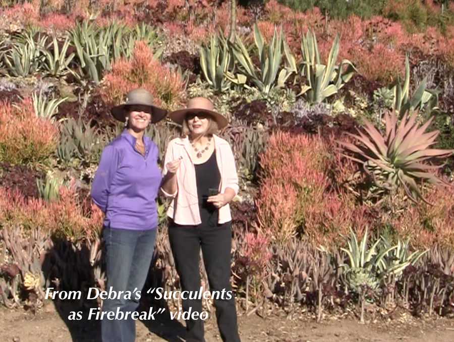 Succulents as Firebreak video